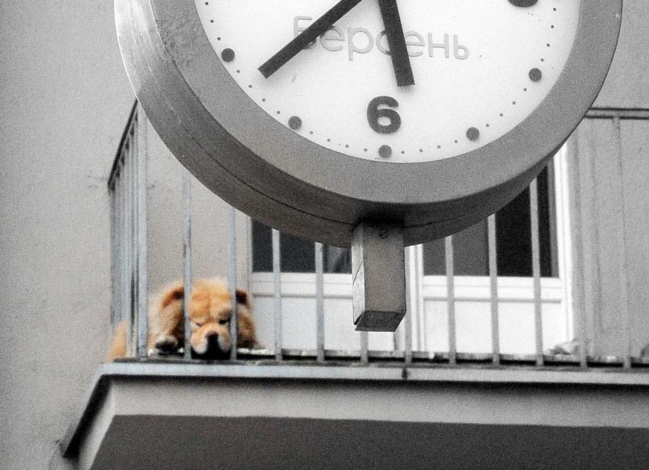 Собака на балконе Дома на набережной