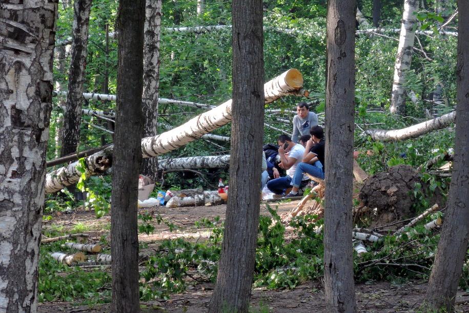 Пикник рядом с поваленными деревьями в парке в Люблино