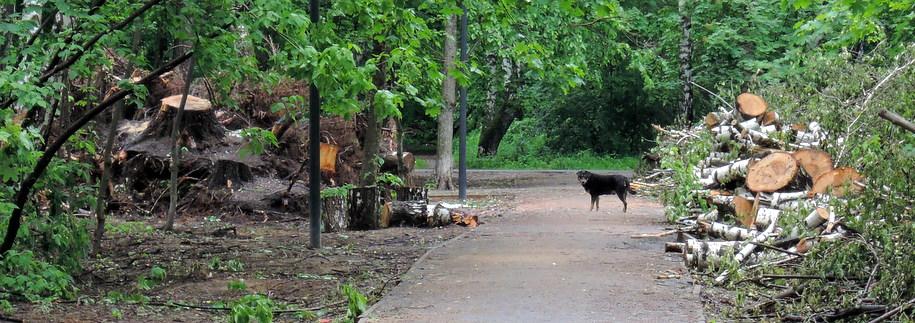 Собака на дорожке рядом с бревнами в парке в Люблино