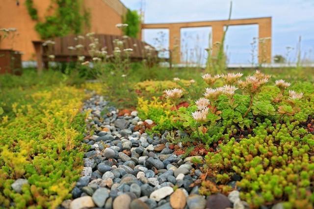 На крышах столичных домов могут появиться сады