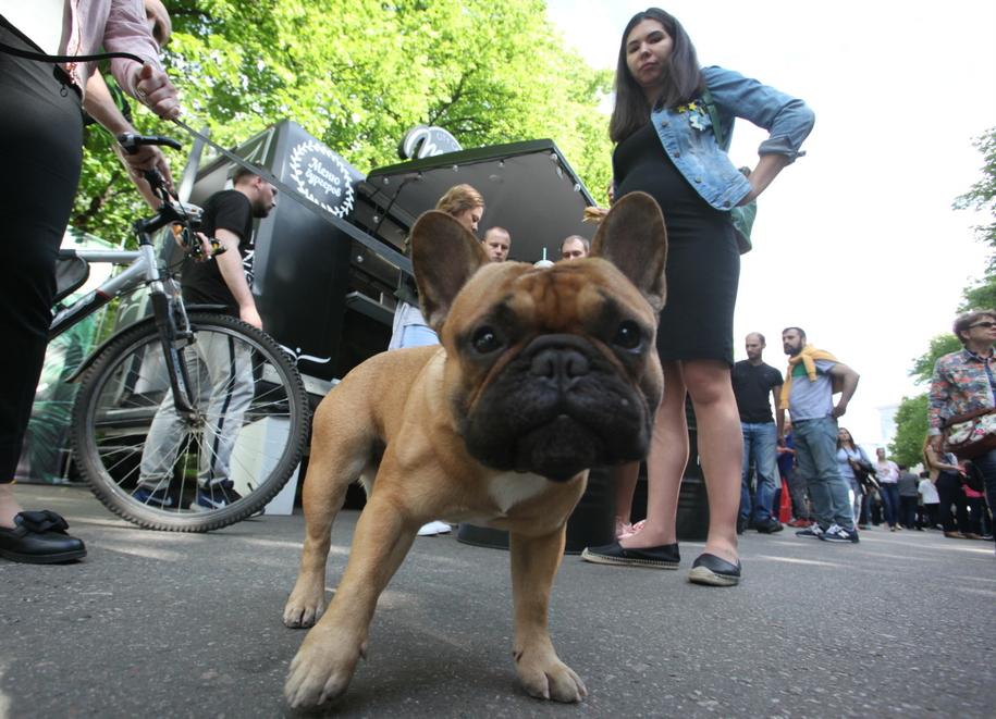 Собака в парке Сокольники