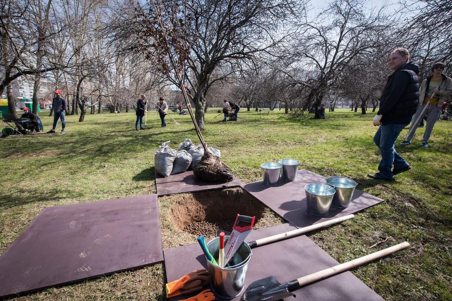 После урагана в Москве высадят более 2500 деревьев