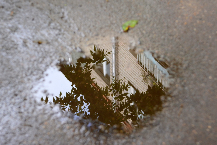Отражение дерева в луже у дома