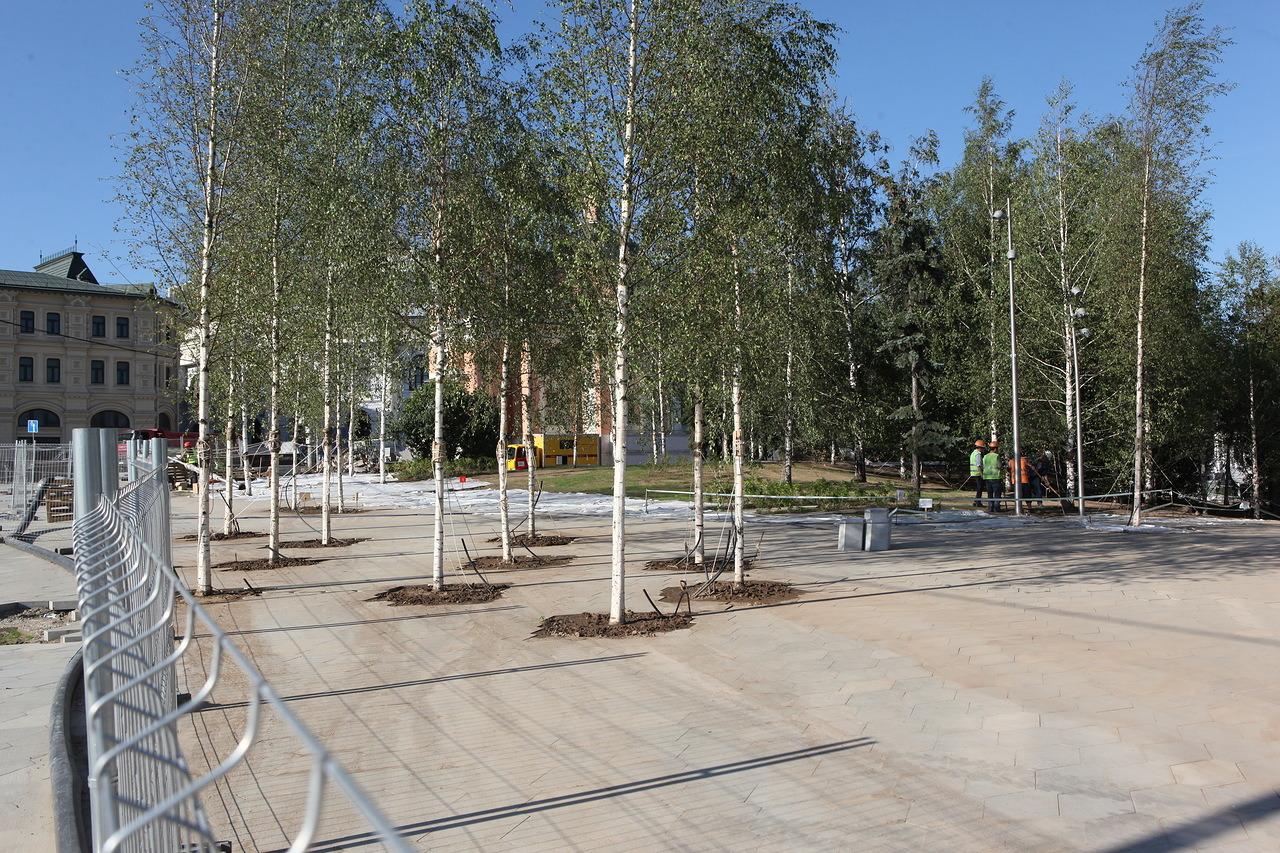 На улицах Москвы стартовали работы по опрыскиванию деревьев
