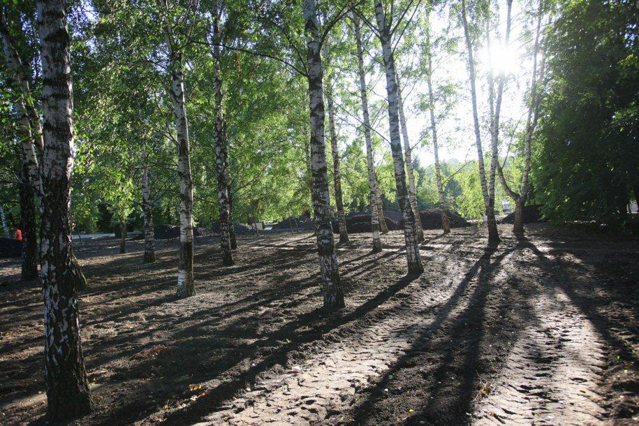 Более 6,5 тысяч деревьев высадят в столице осенью