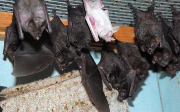 Центр помощи летучим мышам откроется в зоопарке