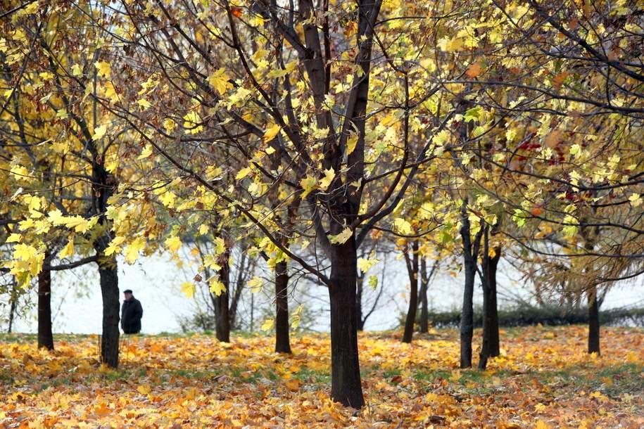 В Серебряном бору заметили самого крупного дятла России