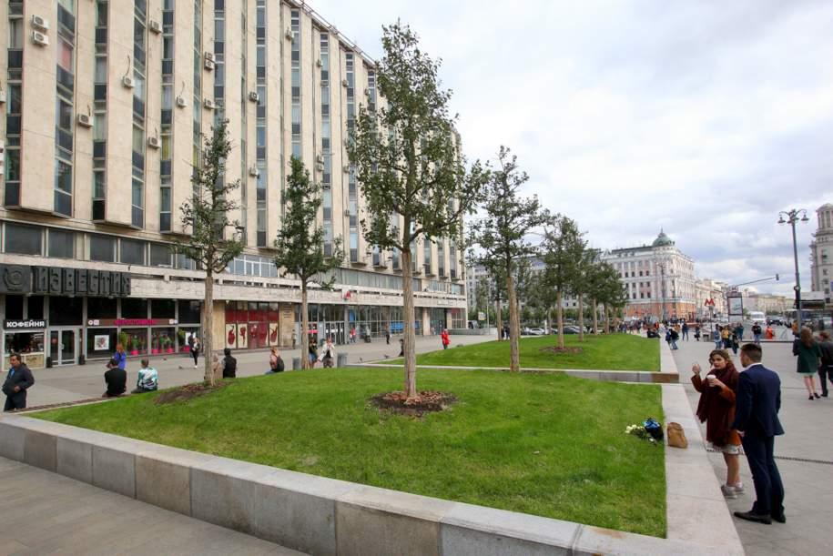 Высадка деревьев на Тверской завершилась