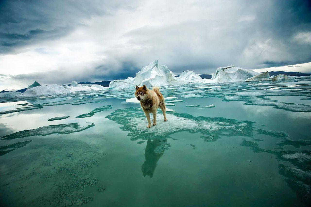 В Москве 25 ноября покажут фильм полярного исследователя