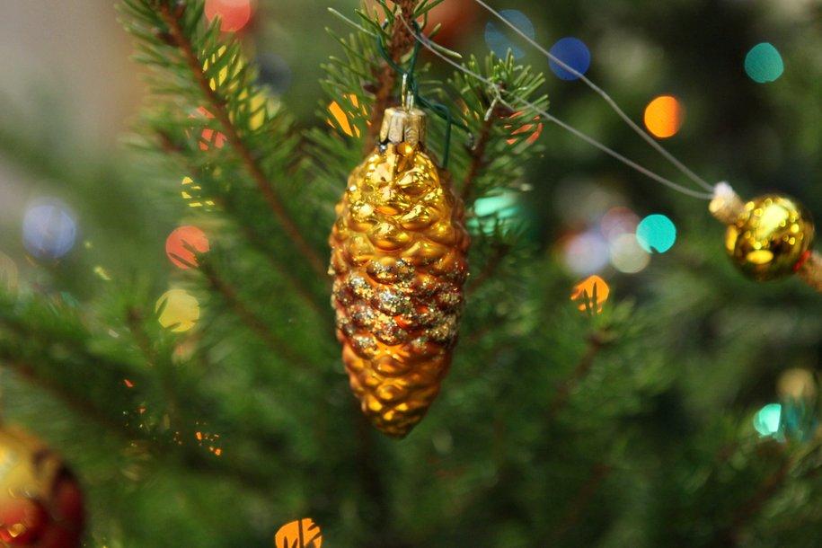 ВПодмосковье срубили главную новогоднюю ель РФ