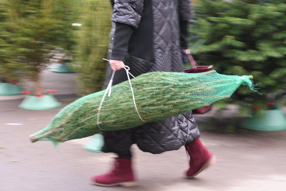 В Москве откроются пункты утилизации ёлок