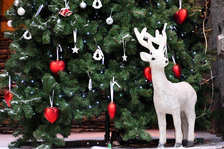 Практически  270 елок украсят столицу  кНовому году