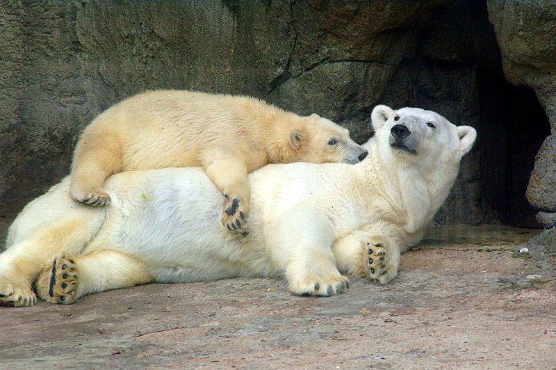 В столичном зоопарке начался «тихий час»