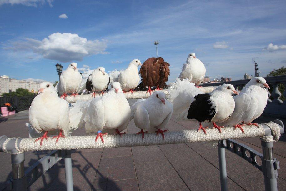 На ЗИЛе построят ЖК со скульптурами голубей