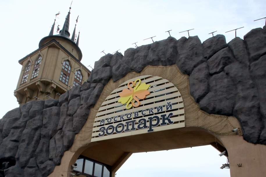 Московский зоопарк закупит огромных бабочек