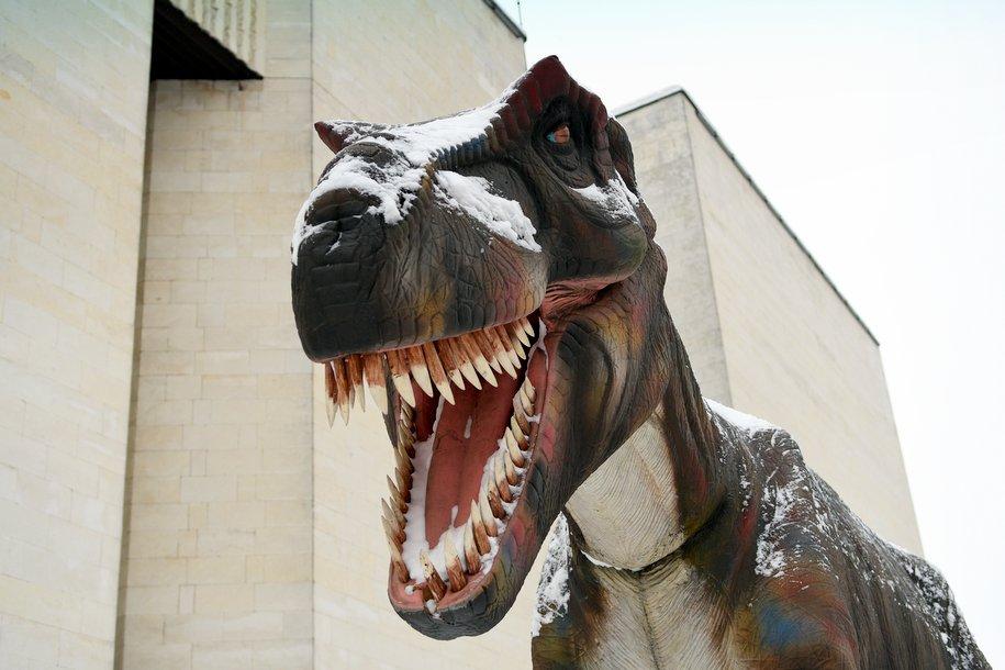 В Дарвиновском музее пройдет День эволюции