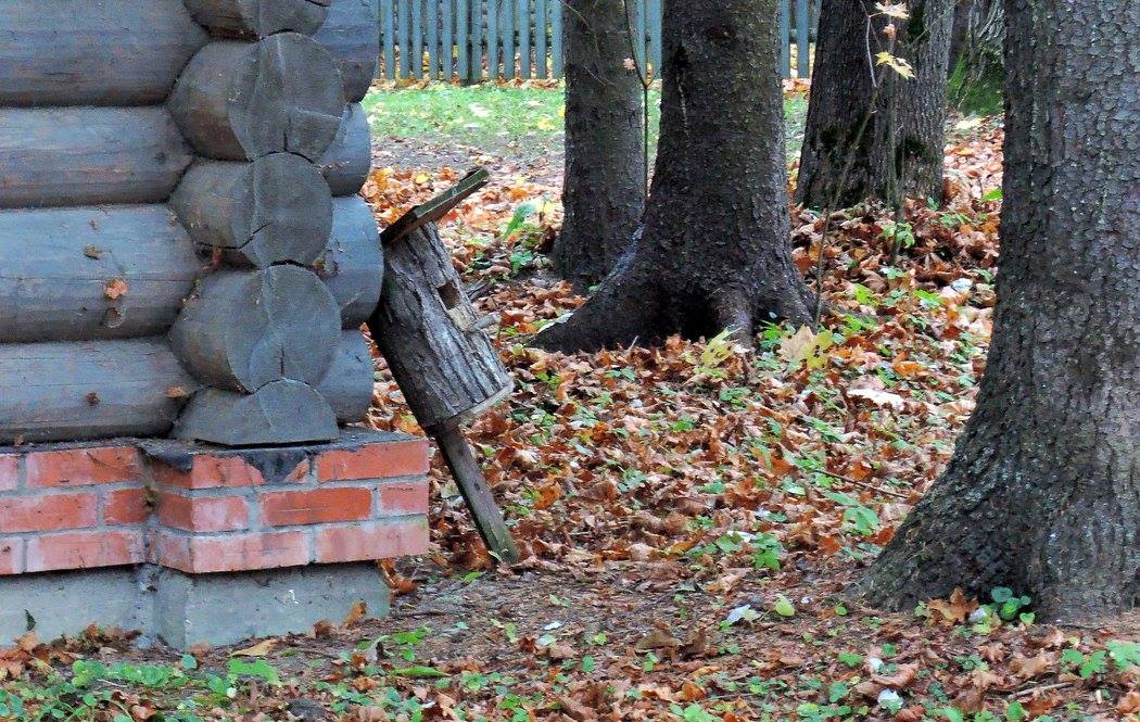В Тимирязевском парке установят дополнительные кормушки для птиц