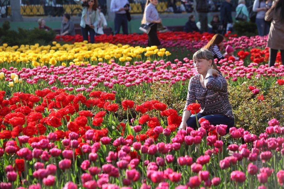Около 2 млн тюльпанов вырастили в Москве к 8 Марта