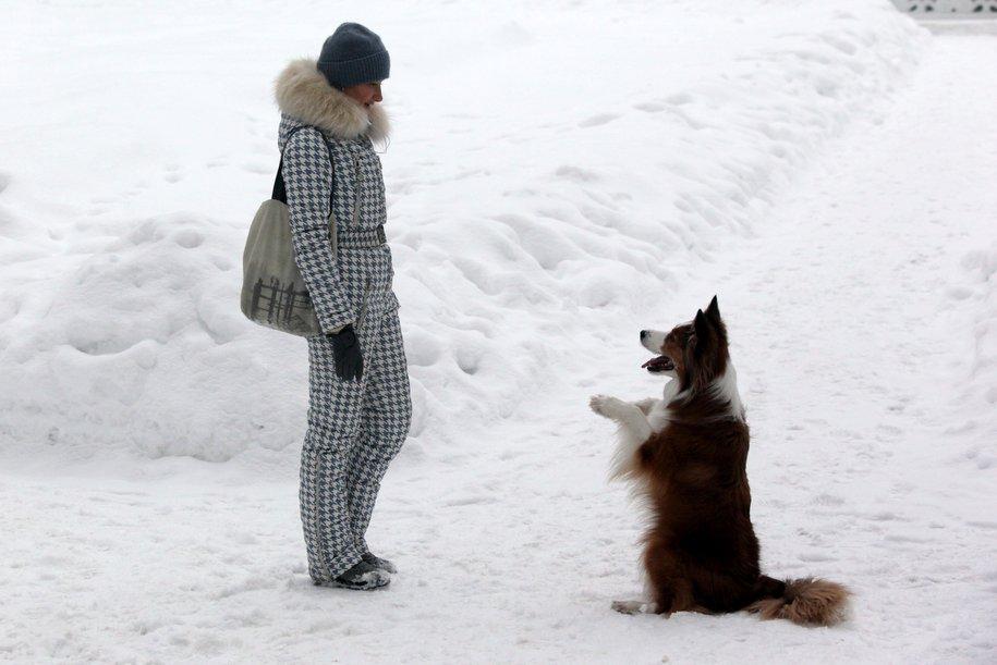 В Москве объявлен «желтый» уровень опасности из-за ветра