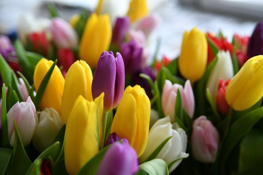 Более 200 тыс. цветов высадят в Парке Горького к лету