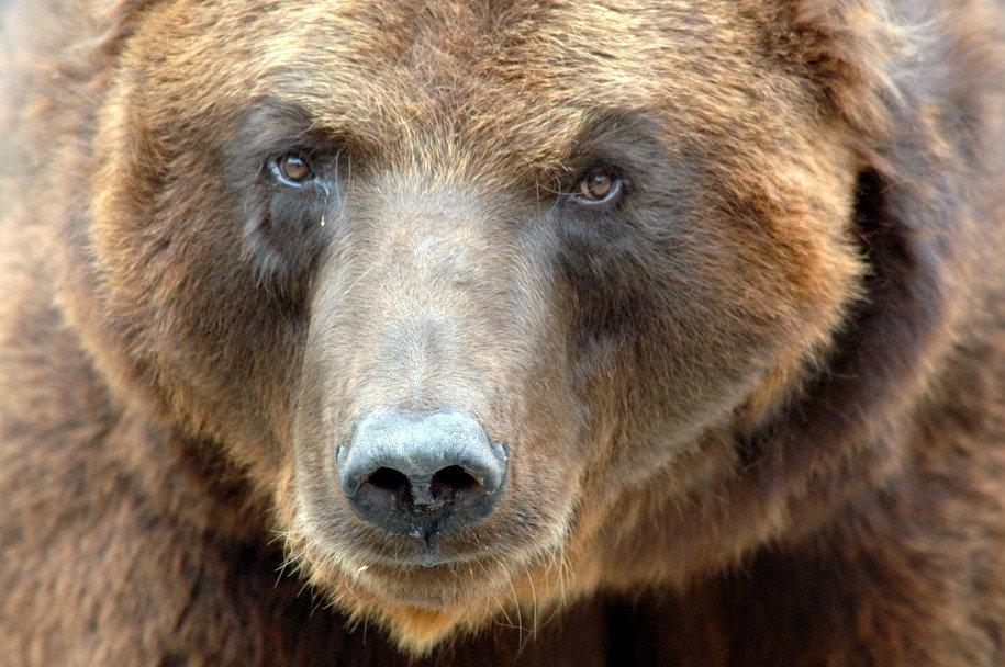 Медведи Московского зоопарка начали впадать в спячку