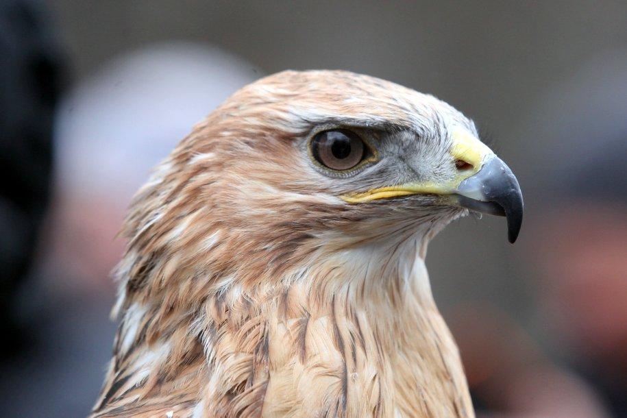 В парке «Сокольники» отметили Международный день птиц
