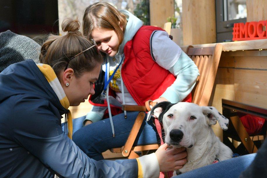 Сергей Собянин взял к себе бездомную собаку на фестивальной площадке «Четвероногий друг»