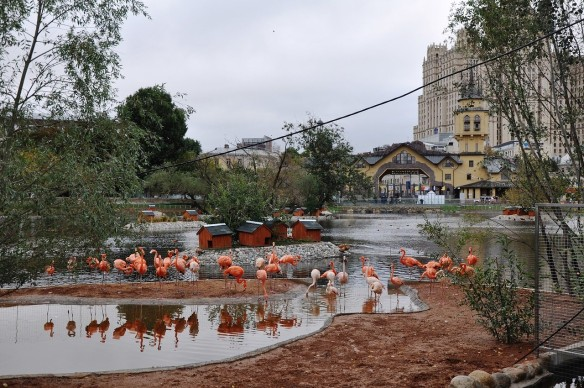 При реконструкции зоопарка Москва сэкономила 68 миллионов рублей