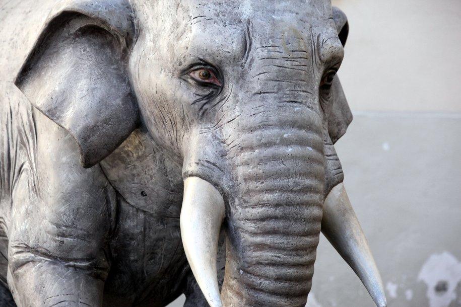 В Московском зоопарке 1 июня откроется выставка картин Ирины Макеевой «Земля слонов»