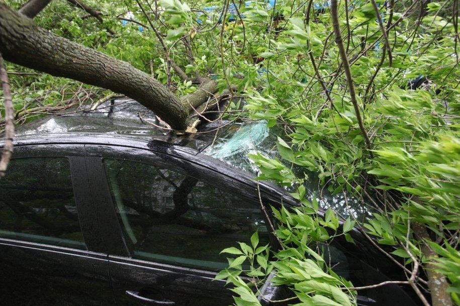 Движение по Тетеринскому переулку перекрыто из-за упавшего дерева