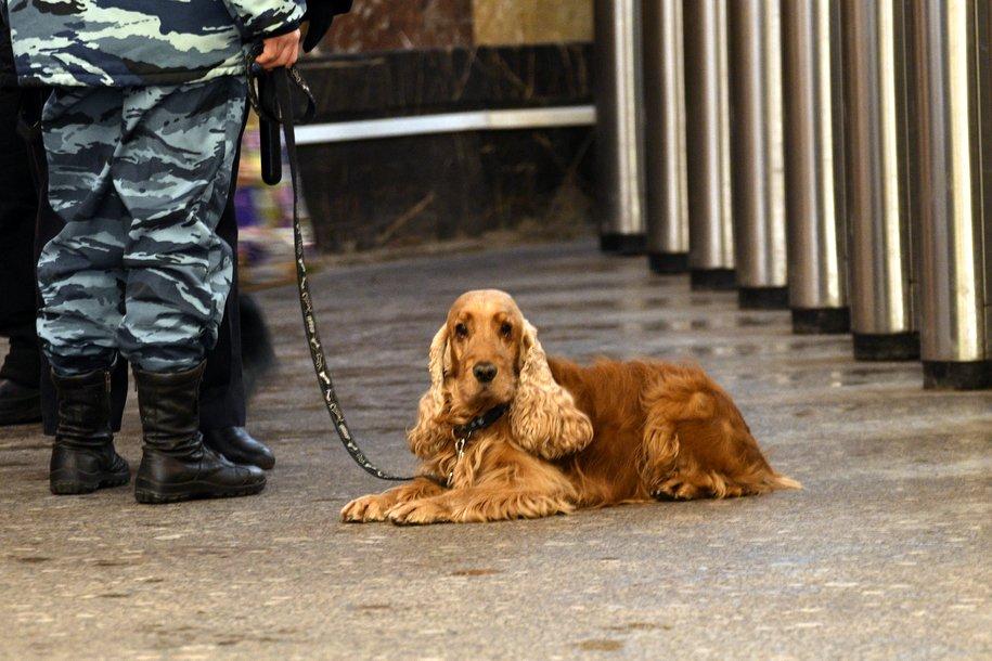 В аэропорту «Шереметьево» задержали собаку