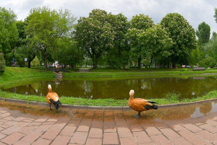 С 27 июля по 26 августа в Москве пройдет 50 бесплатных экскурсий по усадьбам и паркам