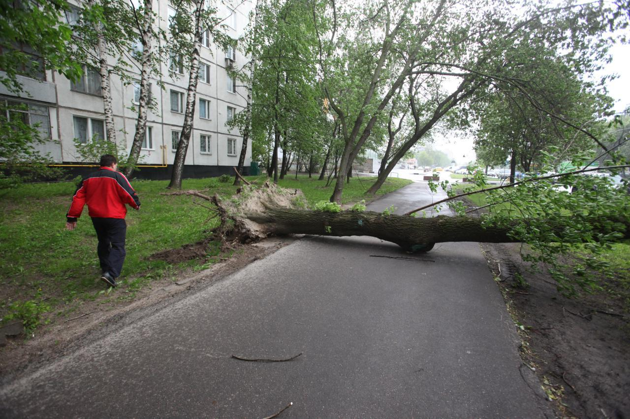 МЧС Москвы опубликовало экстренное предупреждение о грозе и сильном ветре