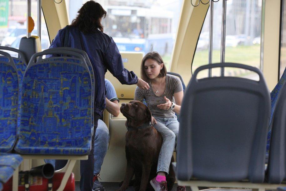 Между поселением Московский и станцией метро «Рассказовка» запустили новый автобусный маршрут №333