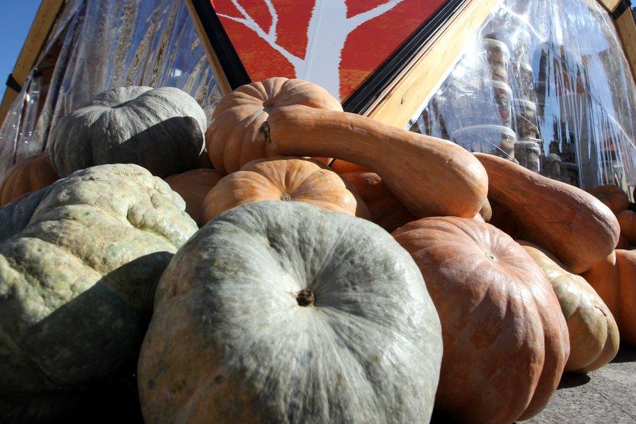 Самую большую тыкву в России выставят в «Аптекарском огороде» с 8 сентября по 14 октября