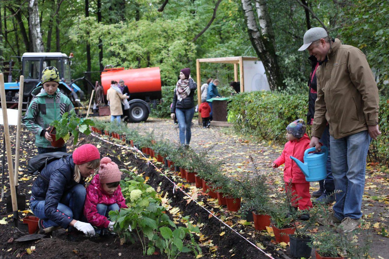 В рамках акции «Миллион деревьев» осенью будет озеленено более тысячи дворов