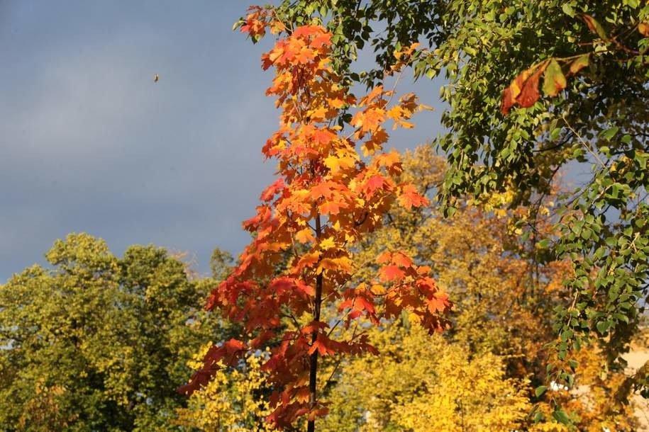 В первую неделю октября москвичей ожидает прохладная осенняя погода