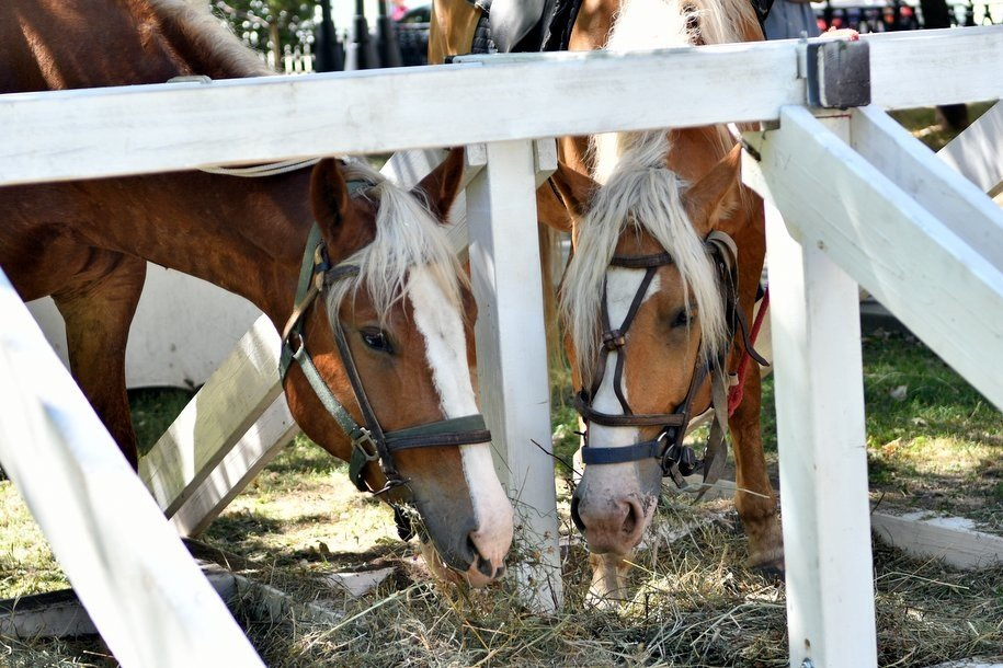 Более 40 наездников покажут свое мастерство на фестивале конного искусства казаков
