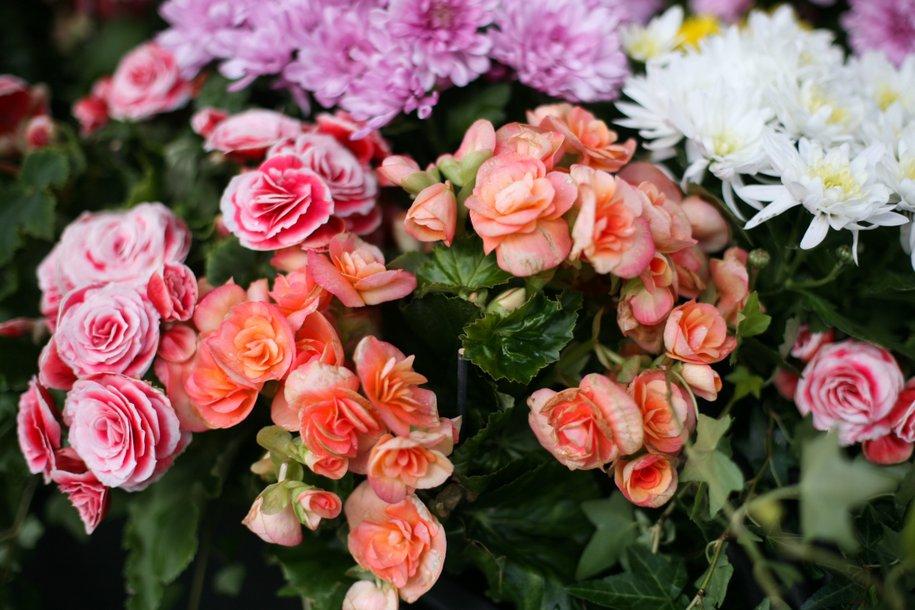 Праздничный букет цветов к Дню учителя обойдется в 800 рублей