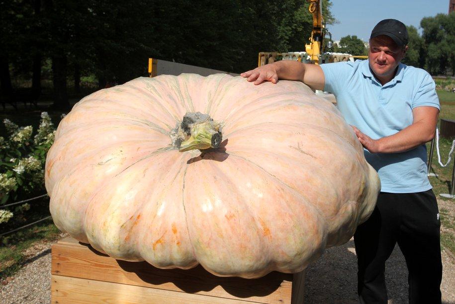 Самая большая тыква в России будет торжественно вскрыта в «Аптекарском огороде» 20 октября