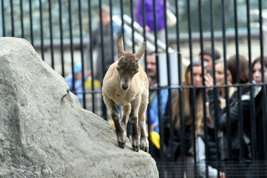 Контактную площадку Московского зоопарка закрыли по техническим причинам