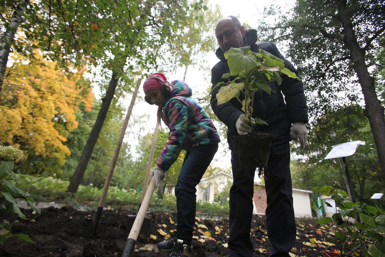 В парке на Ходынском поле посадили 1,5 тыс. деревьев