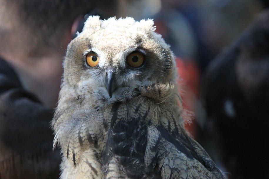 Инспекторы департамента природопользования столицы спасли трех сов