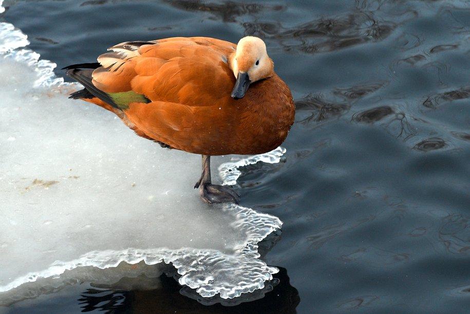 На столичных водоёмах установили знаки запрещающие выход на лёд