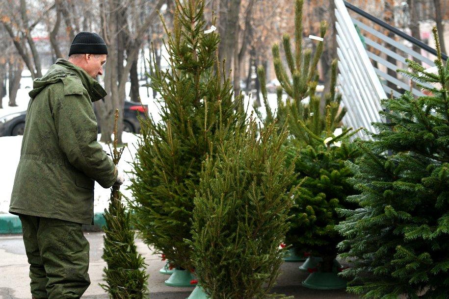 Около 270 елочных базаров начали работу в Москве