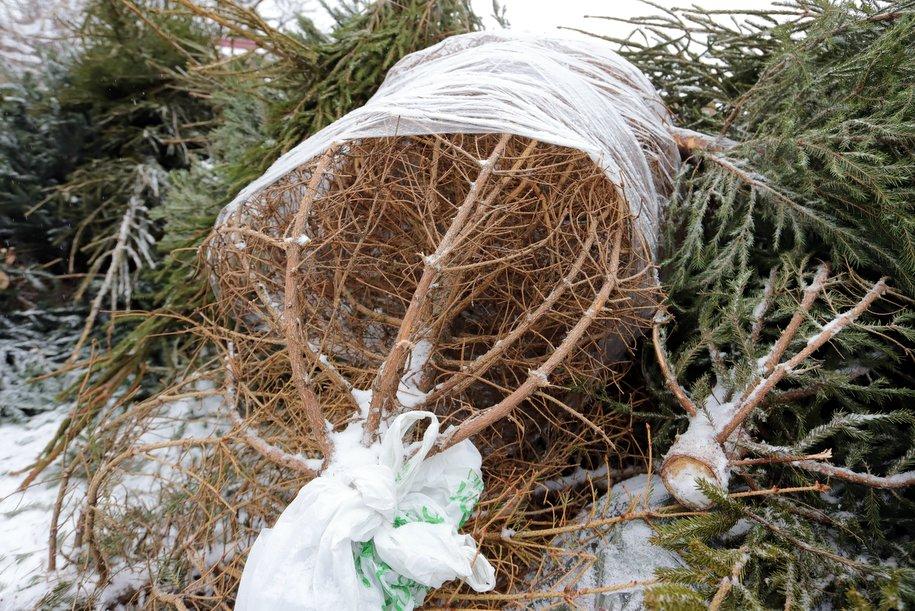 За неделю акции «Елочный круговорот» москвичи сдали 2,6 тысяч новогодних ёлок