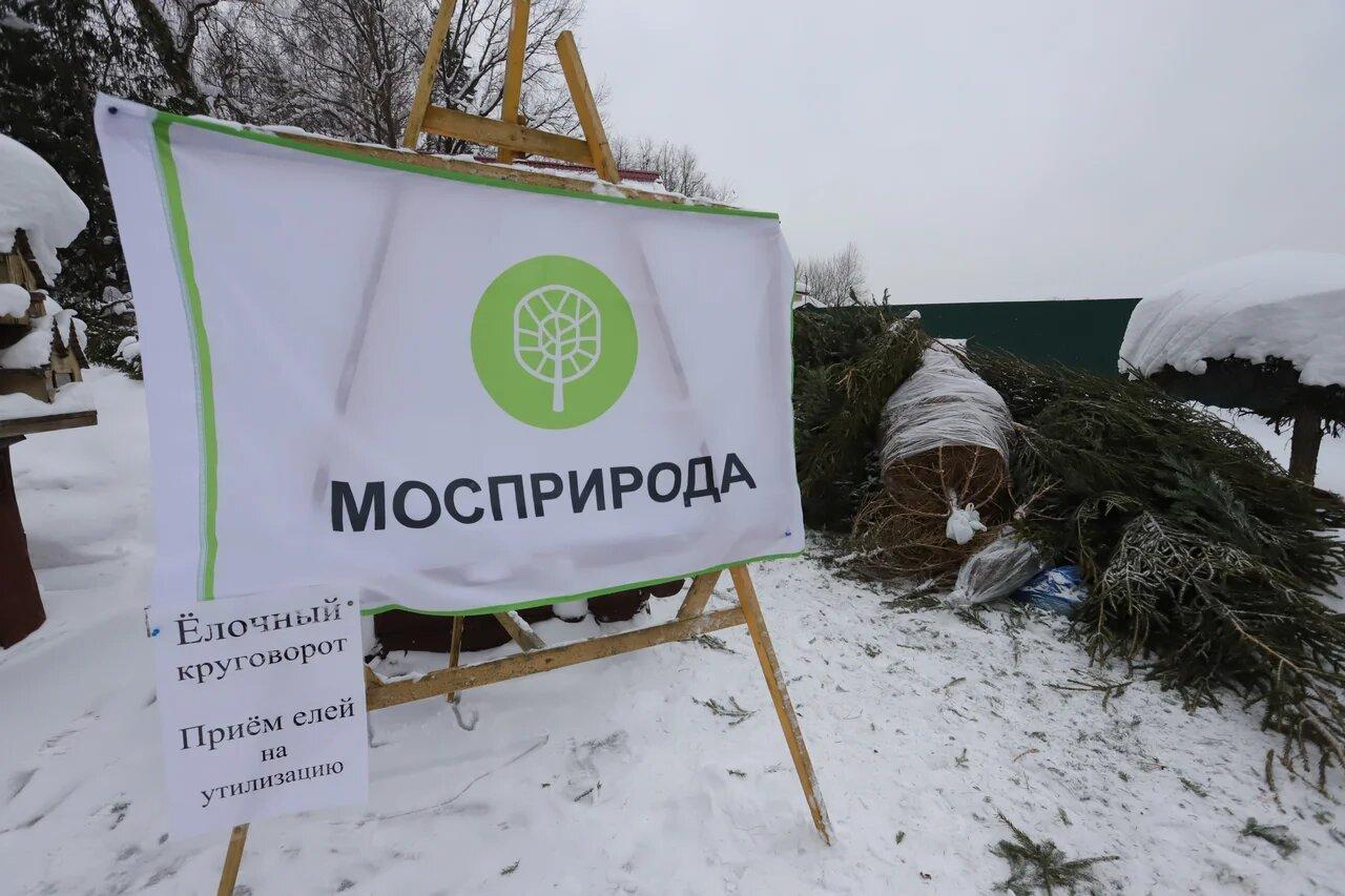 Почти 2,6 тыс новогодних елей сдали москвичи в рамках акции «Елочный круговорот»