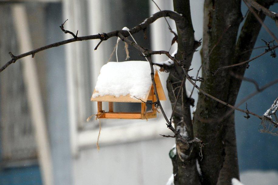 В парке Сокольники начали бесплатно раздавать корм для птиц