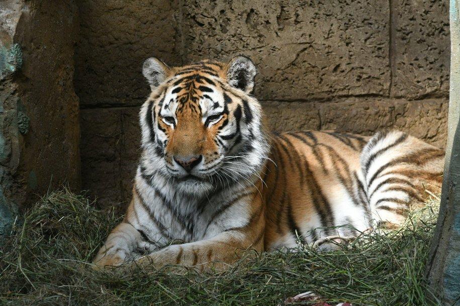 С 1 марта Московский зоопарк переходит на весенний режим работы