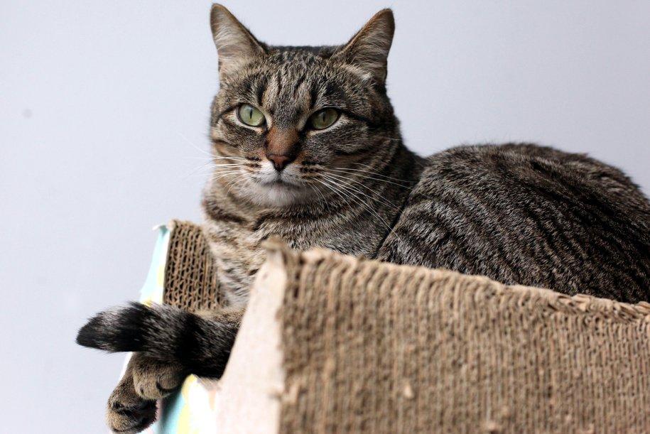В Домодедово не пустили в самолёт кошку, которая следовала в Болгарию
